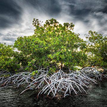 Mangrove Curacao van