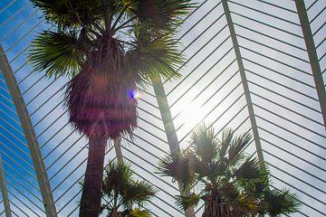 palm boom voor de zon van daan van den heuvel