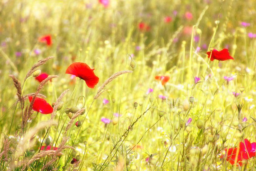 Bloemenveldje met klaprozen van Jessica Berendsen