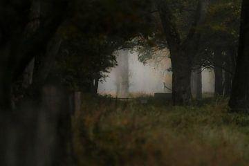 Een duister Weerterbos van Jarno van Osch