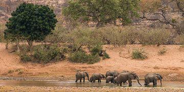 Olifanten in Afrika sur Mark den Boer