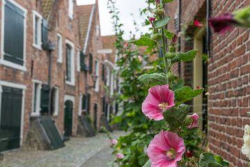 Middelburg, Kuiperspoort, mit schönen rosa Blüten, Stockrose, im Vordergrund