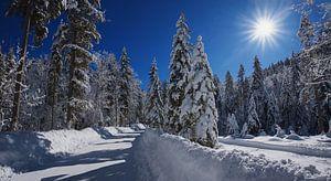 Winterbos in kreuth van Susanne Bauernfeind