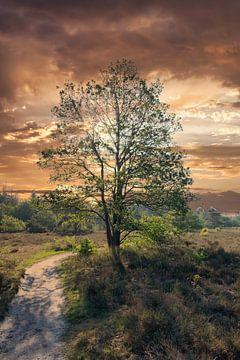 Heideveld met boom van Karen Klein