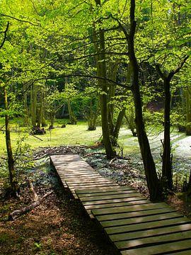 Im Moor von Ostsee Bilder
