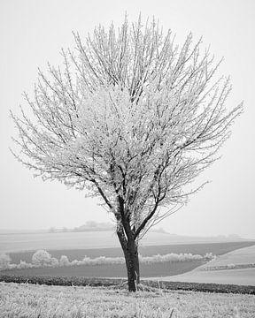 Winter-Ernte 1 von Keith Wilson Photography
