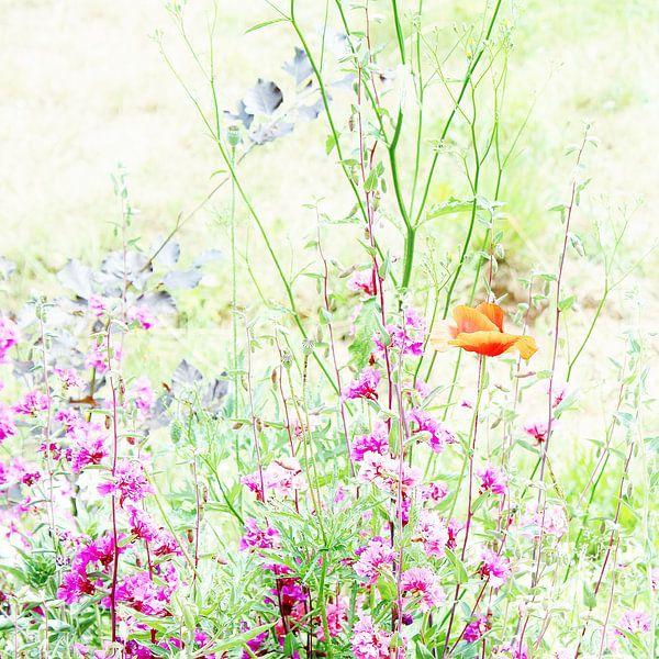 Fairy flowers van Stephanie Köhl