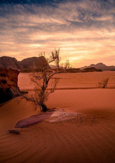 Struik in Wadi Rum