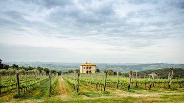 Toscaanse wijnvelden van Angelica van den Berg