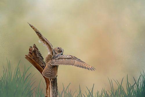 Een gedetailleerde Oehoe met gespreide vleugels land op een boomstronk. Bruin gele lucht met gras in