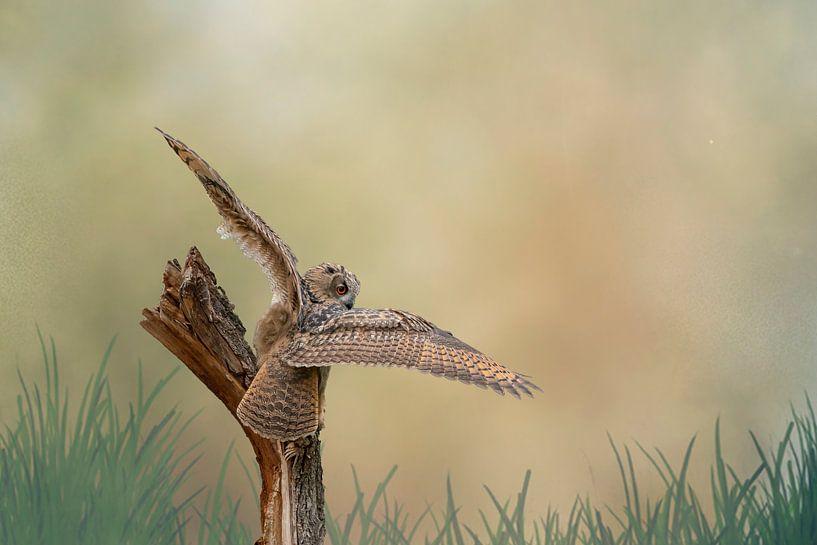 Een gedetailleerde Oehoe met gespreide vleugels land op een boomstronk. Bruin gele lucht met gras in van Gea Veenstra