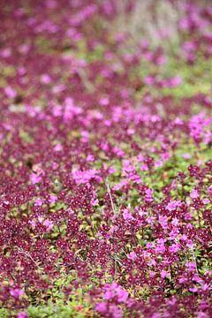 bloomingtales van Meleah Fotografie
