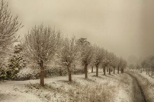 veere in de sneeuw