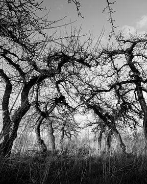 Treurige appelbomen van Sense Photography