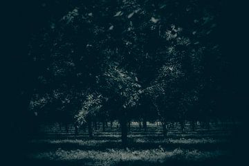 licht in de duisternis van Esther Swaager ( Studio Toet)