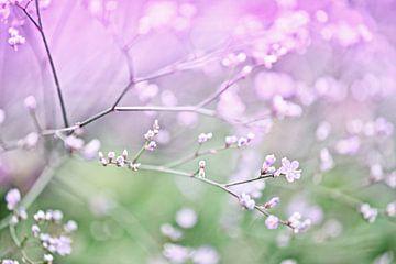 Blüte II von Jessica Berendsen
