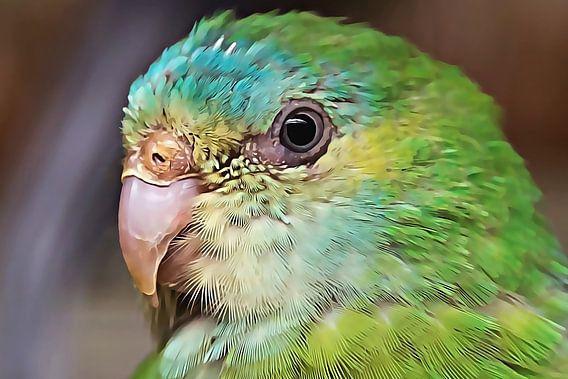 Groen parkiet (close-up)