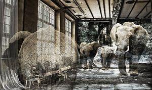 Out of Africa van MirEll digital art
