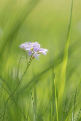 Pinkstrbloemen van Vandain Fotografie