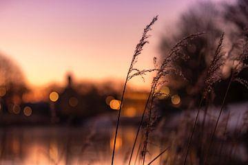 Sonnenaufgang zwischen den hohen Gräsern in Middelburg 2 von Percy's fotografie