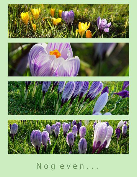Voorjaar komt er aan