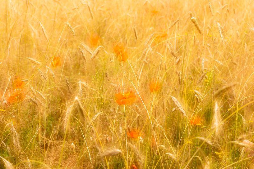 Klaprozen in een korenveld op een zomerse dag van Erna Böhre