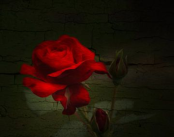 Rose sur Gabriele Haase