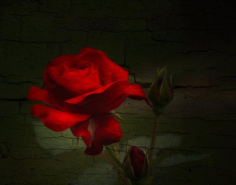 Rose van Gabriele Haase
