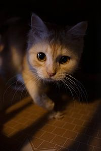 Katten portret van