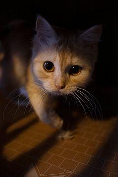 Katten portret van Maxime Jaarsveld