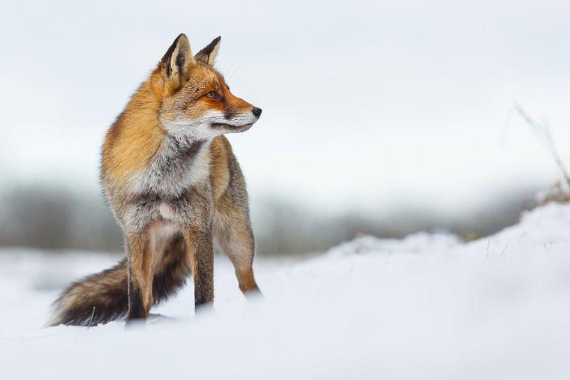 Beauty in the snow van Pim Leijen