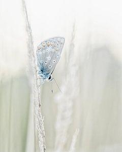 Icarus Blauwtje (vlinder) in zachte kleuren van Caroline van der Vecht
