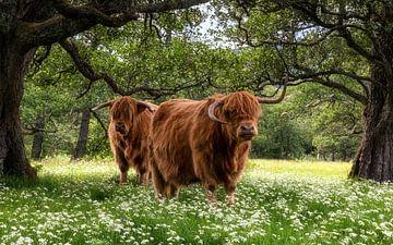 Frühling in den Cairngorms sur