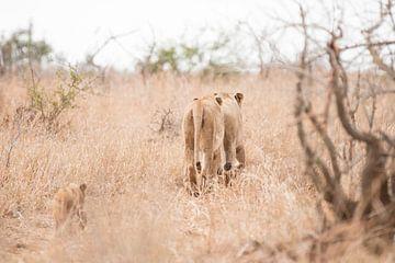 Familie leeuw sur Riana Kooij