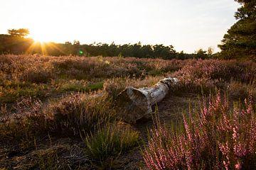 Heidekraut-Sonnenuntergang in Warnsborn Arnheim von E.H. Efek