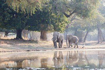 Elefanten für atmosphärische Bäume von Anja Brouwer Fotografie