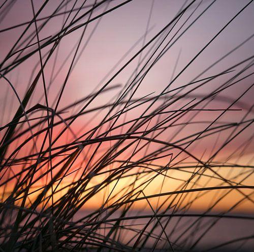 Grassen in regenbooglicht