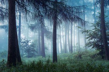 Forêt nuageuse sur W. Lohof