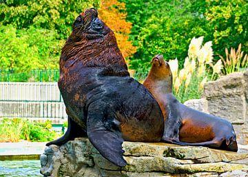 Sea lions van Leopold Brix