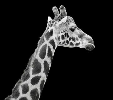 Portret giraffe in zwart-wit van Marjolein van Middelkoop