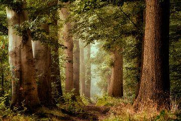Fairy Forestry van Lars van de Goor