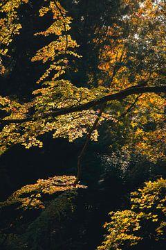Herfstkleuren in het bos van Thomas Kuipers