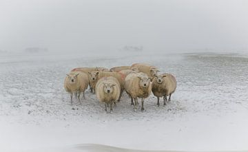 Schafe im Schneesturm von Jaap Terpstra