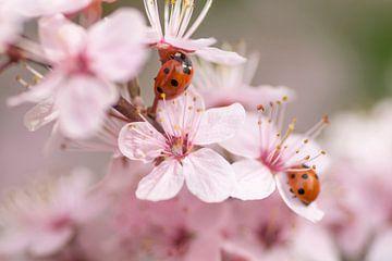 Sweet springtime van Birgitte Bergman