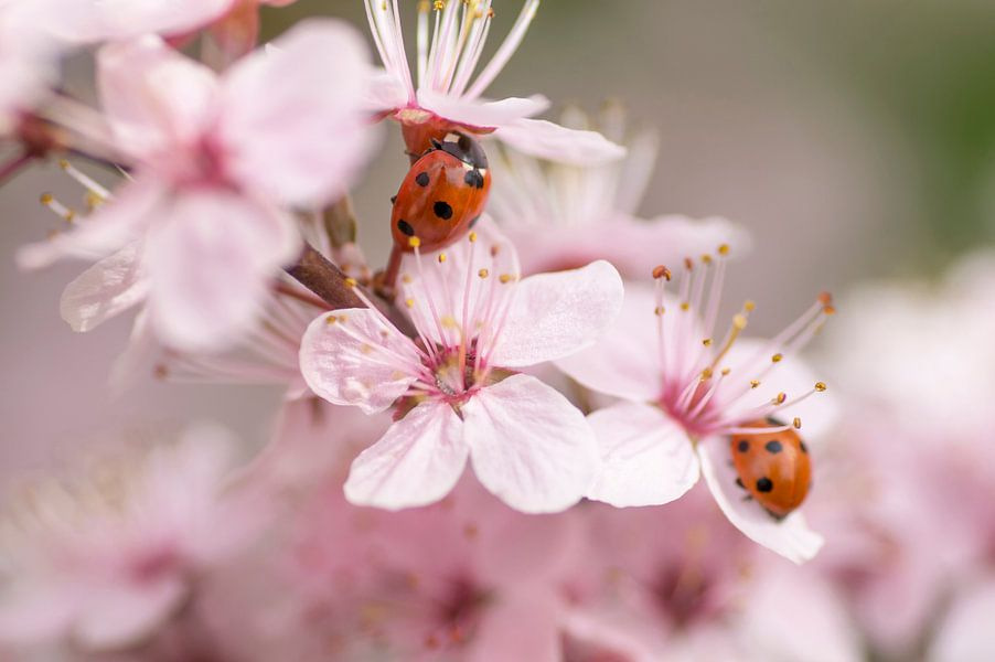 Sweet springtime