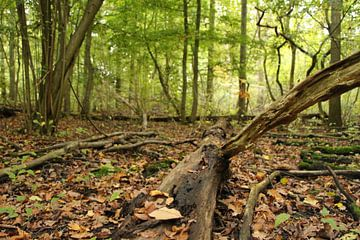 Bos met omgevallen boom van Charissa Oudejans