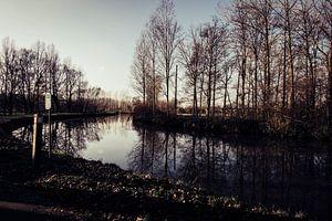 Winter 2020 Dender - Pollare von vw-photography