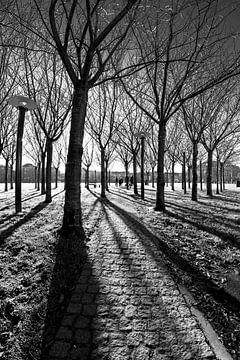 Amsterdam - Museumplein in tegenlicht van Tony Buijse