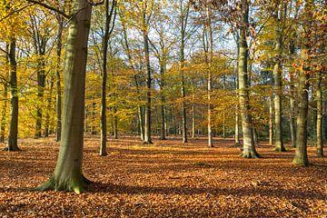 Landschaft mit bunten Buchenbäumen im Herbst von Ger Beekes