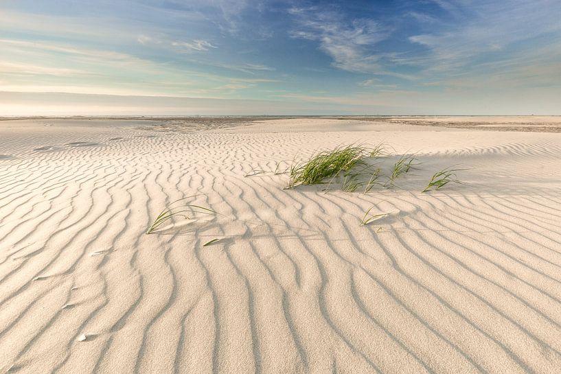 Helmgras Noordzeestrand Terschelling. van Jurjen Veerman